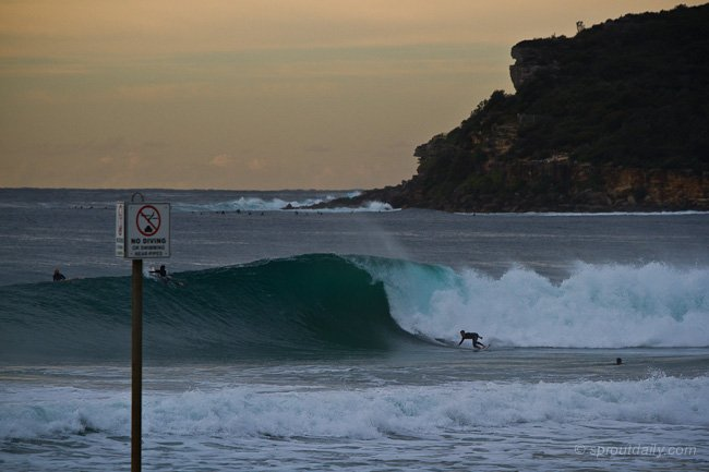 manly surf